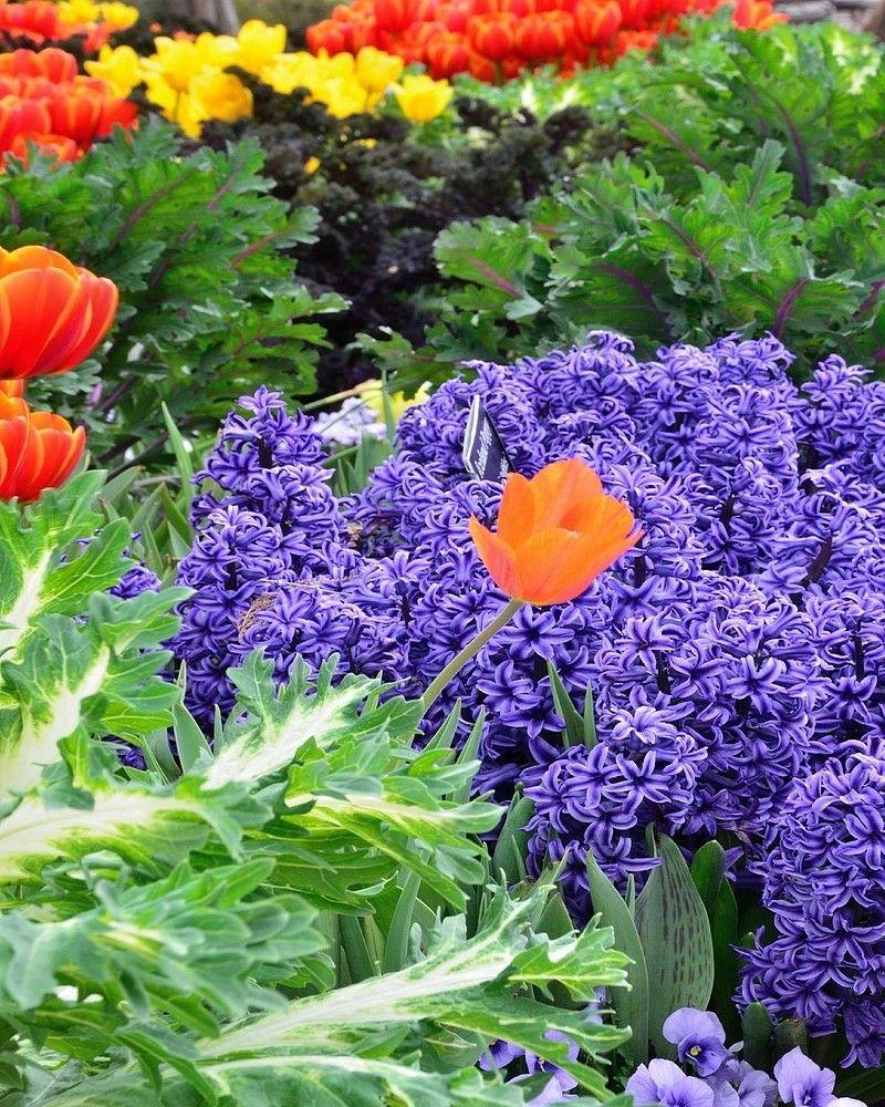 Fleurs - Initiatives fleurs et nature ...